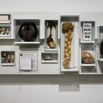 Loki Schmidt Haus - Museum für Nutzpflanzen, Hamburg